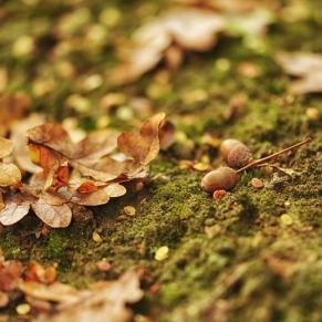 autumn-3146074_1920-1024x681
